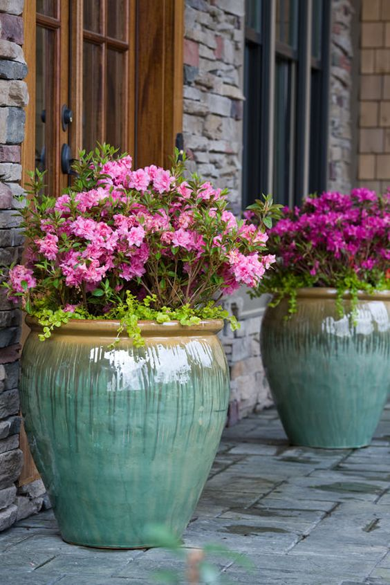 oversized glazed pots with bold purple flowers