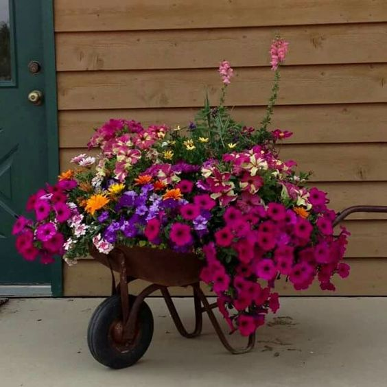 an old metal garden cart working as a flower bed or a planter