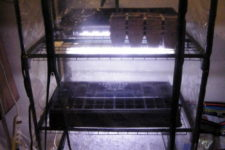 DIY inexpensive seed starting system and greenhouse