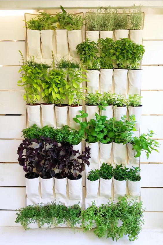 a hanging canvas shoe organizer repurposed into a vertical herb garden