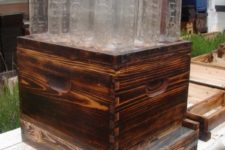 DIY bee hive in a jar