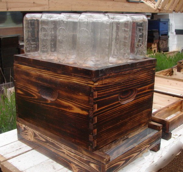 DIY bee hive in a jar