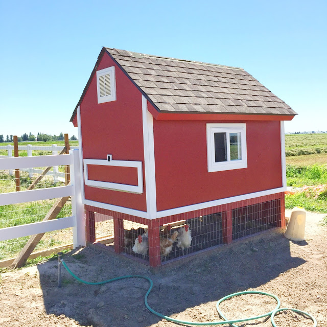 DIY chicken coop from pallets