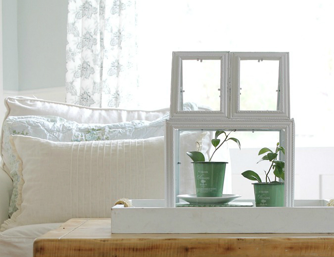 DIY indoor greenhouse made of picture frames