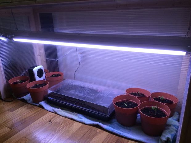 DIY indoor greenhouse with pots and containers inside