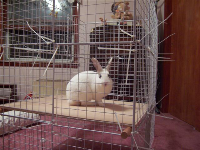 DIY indoor bunny cage with a hay tray (via breyfamily.net)