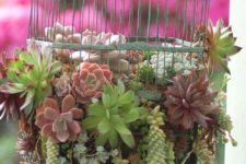 hanging succulent garden created with a bird cage
