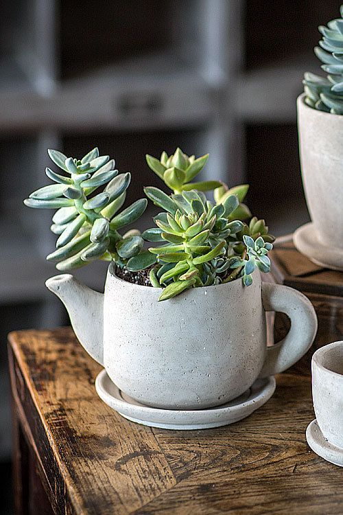 modern concrete tea pot planter can be made by you