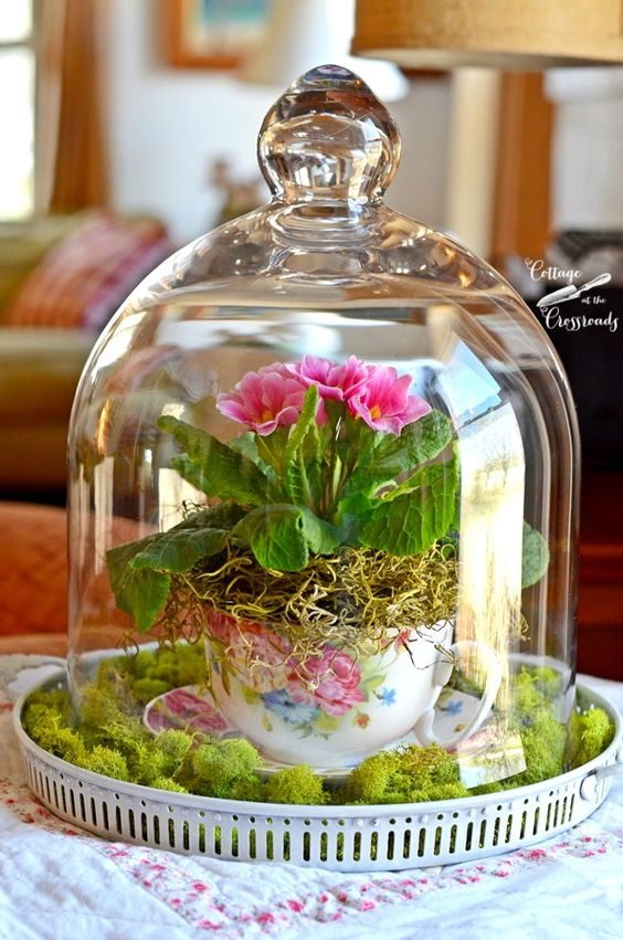 a cloche with moss and flowers in a vintage tea cup