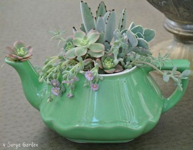 green tea pot for growing succulents