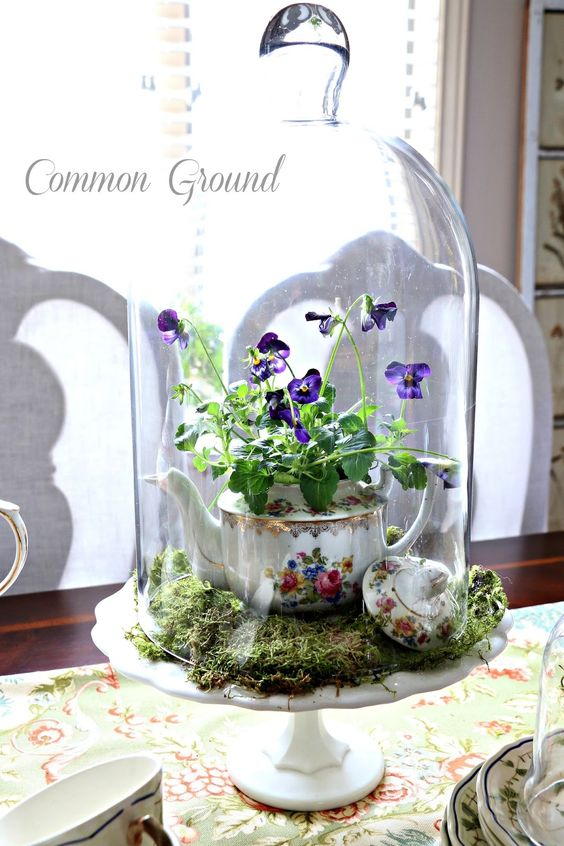 a cloche with moss and violas in a tea pot