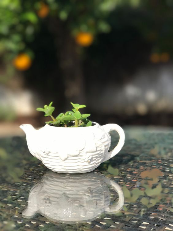 small white tea pot planter with succulents