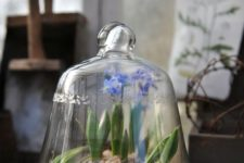 09 a cloche with spring bulbs on a vintage tray