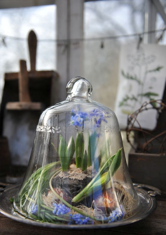 a cloche with spring bulbs on a vintage tray