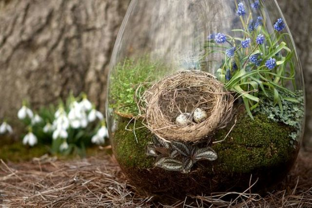 a droplet terrarium with moss, spring bulbs and a bird nest