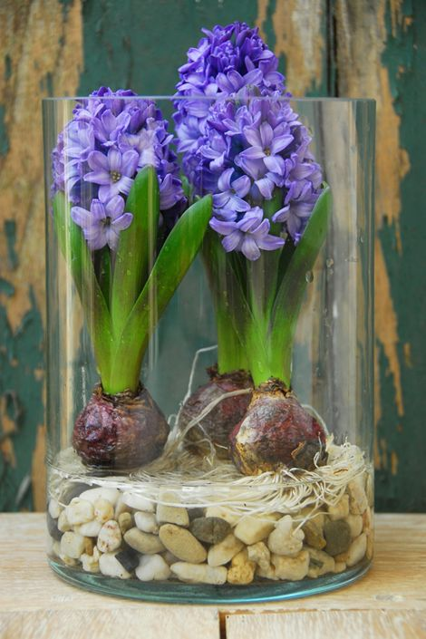 a glass jar with spring bulbs and pebbles
