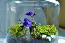 14 a jar with African violas, some moss and sparkling pebbles