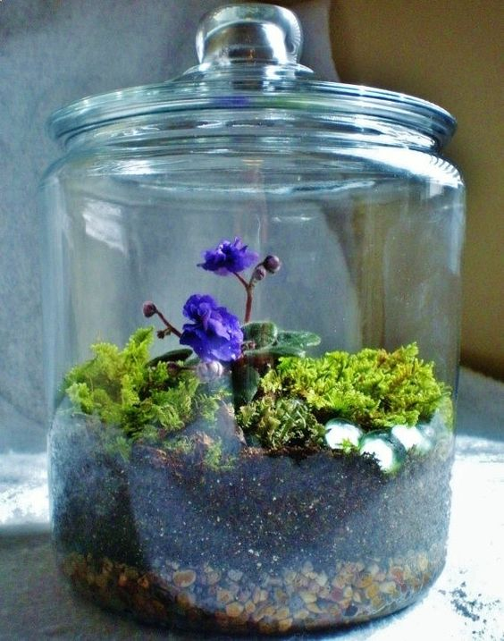 a jar with African violas, some moss and sparkling pebbles