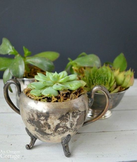 thrifted silver sugar bowls with succulents