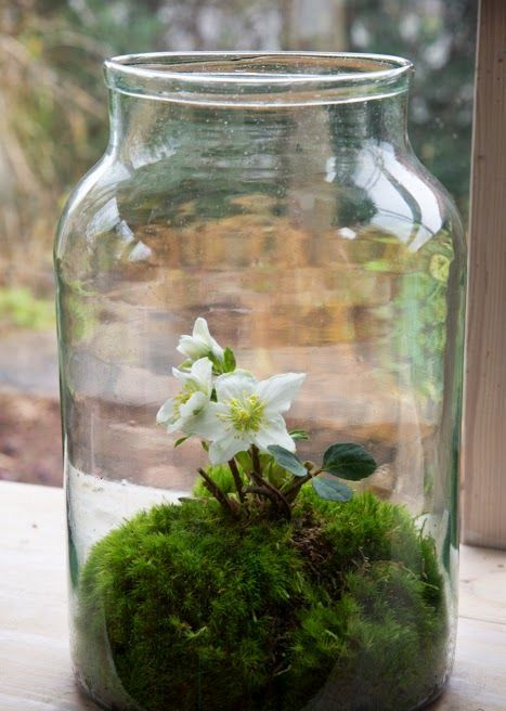 an oversized jar with moss and flowers
