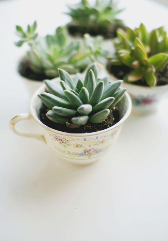 vintage tea cups with succulents