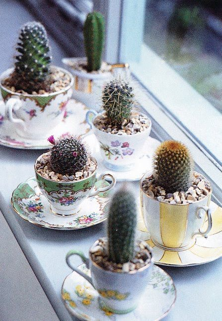 a whole vintage tea cup garden with cacti