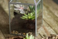 19 small zinc and glass terrarium with succulents