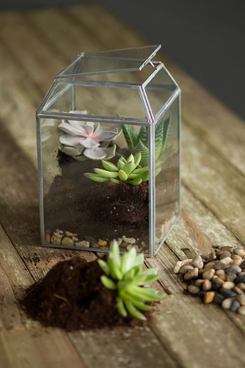 small zinc and glass terrarium with succulents