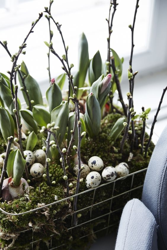 wire basket arranhement with moss, leaves, bulbs, willow and speckled eggs