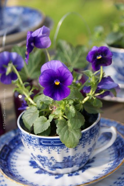 blue hand painted cups and saucers with purple pansies