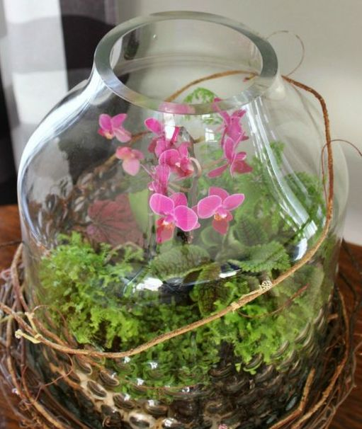 spring mini orchid terrarium in a jar, greenery inside