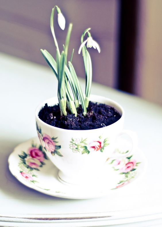 flower cup and saucer with snowdrops