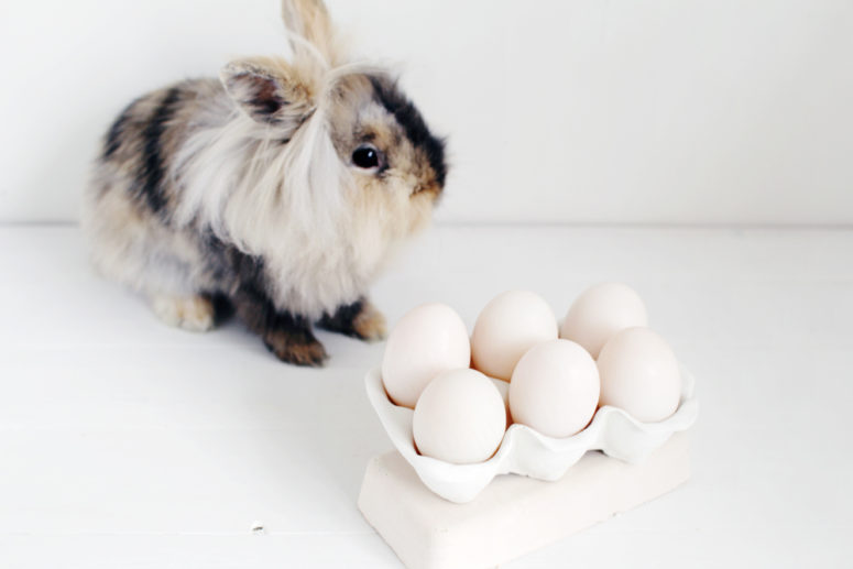 DIY clay egg carton for displaying eggs (via fallfordiy.com)