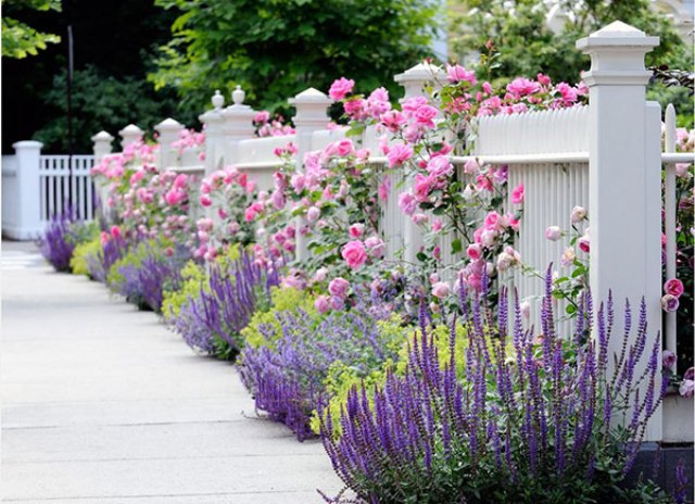 accentuate your picket fence with pink roses to give a it a cute touch