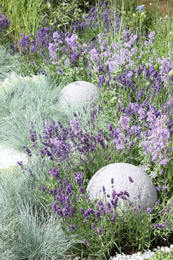 lavender and blue Fescue grass to highlight it