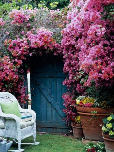 cover the archway and wall with bold bougainvilleas and enjoy the look