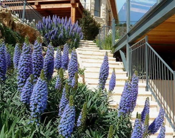 dusty blue Pride Of Madeira, emphasized the length of the staircase