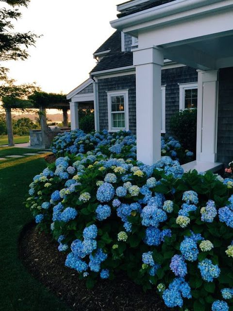 blue and grene hydrangeas to border the house and give it a cute country look