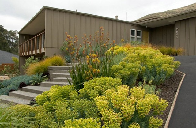 use Euphorbia Rigida to add volume, texture and color to your landscape