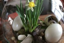 19 a terrarium with daffodils, eggs of different sizes and moss