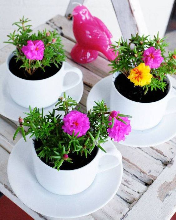 bold flowers planted in modern white teacups