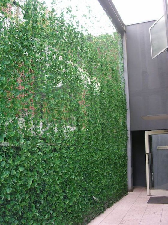 tall ivy privacy screen is a super natural idea to realize