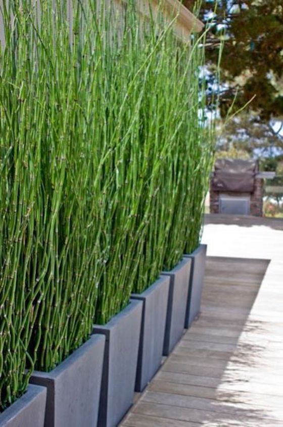place modern planters with horsetail grass for a stylish modern space