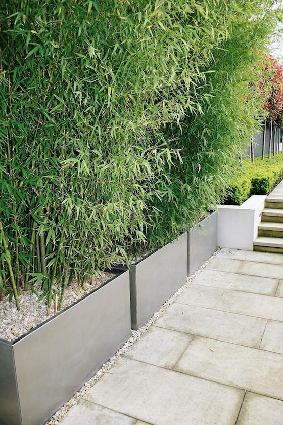 modern metal planters with bamboo will make lush greenery screens