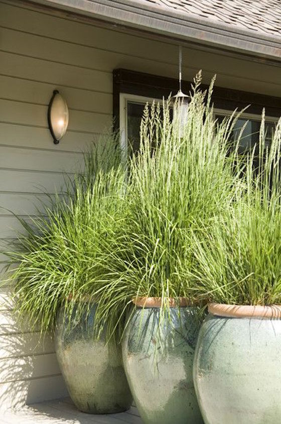 oversized ceramic planters with ornamental grasses for a chic space