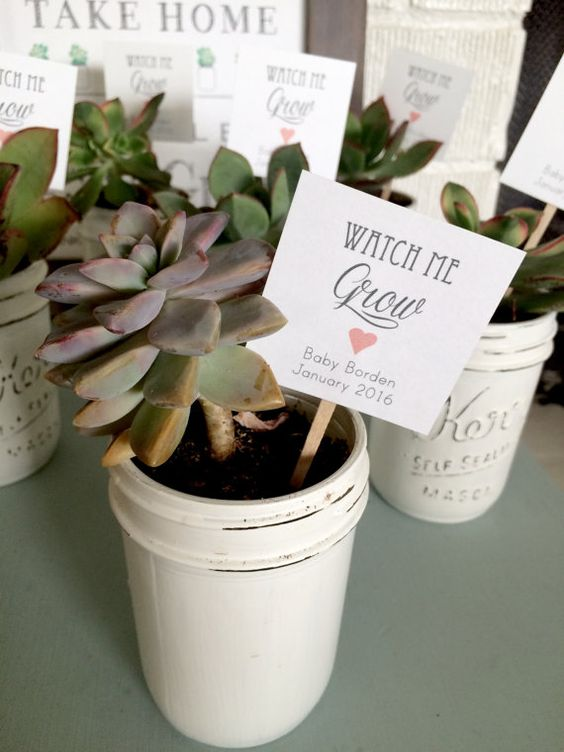 plant succulents into whitewashed mason jars for a cute vintage feel