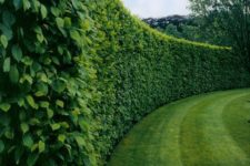 19 a lush boxwood hedge will cover your garden perfectly