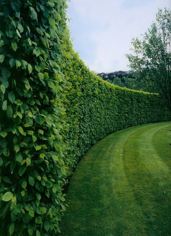 a lush boxwood hedge will cover your garden perfectly