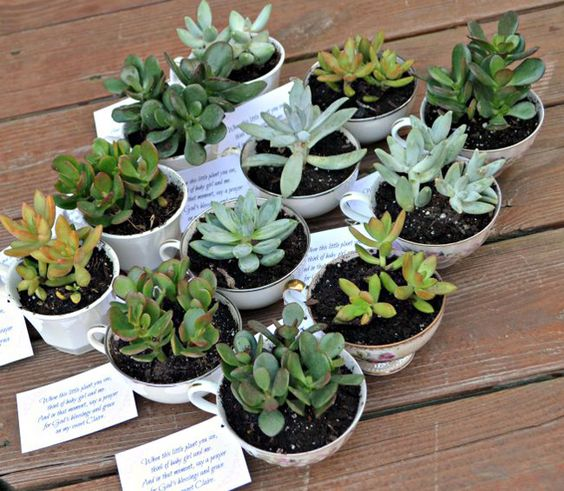 succulents potted into vintage cups can be great DIY favors