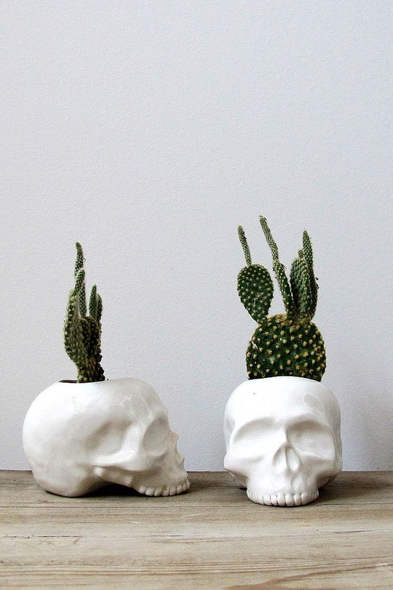 white skull planters with cacti will make your interior chic and modern